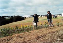 Tournesols au NLSD 2004